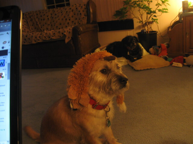3.Bailey.Egyptian.Hat.1.12.15