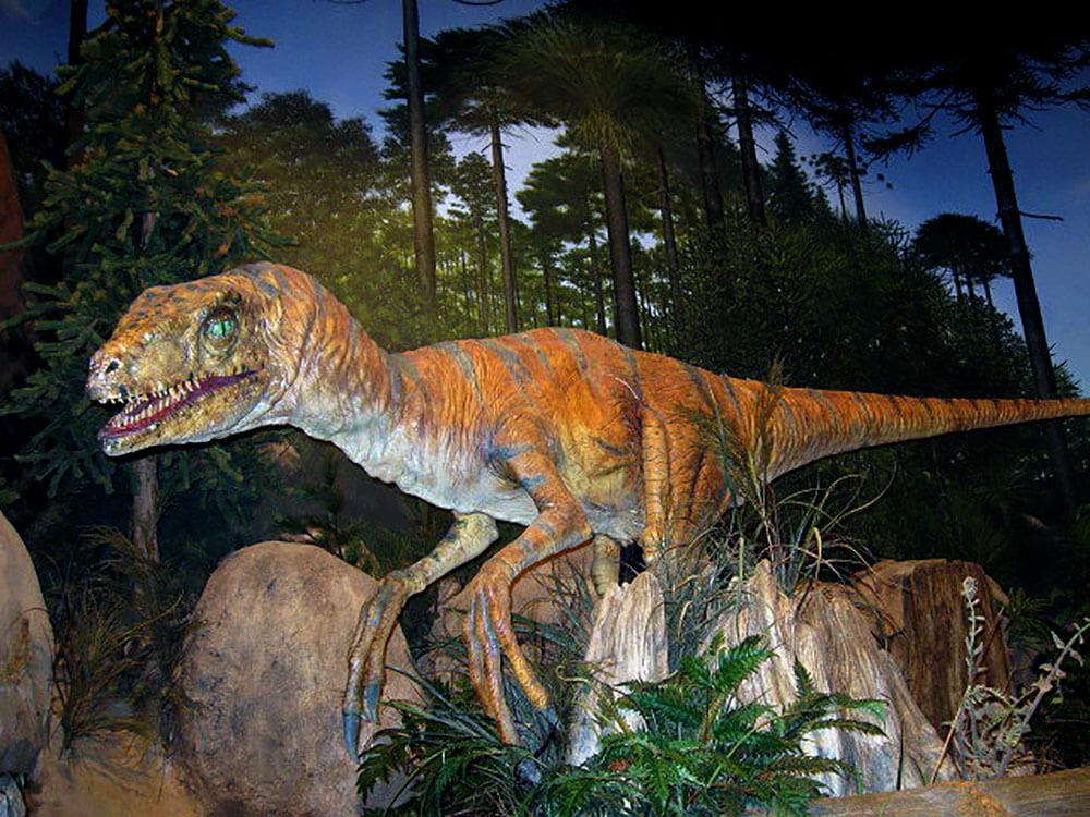 Dinosaur-Display