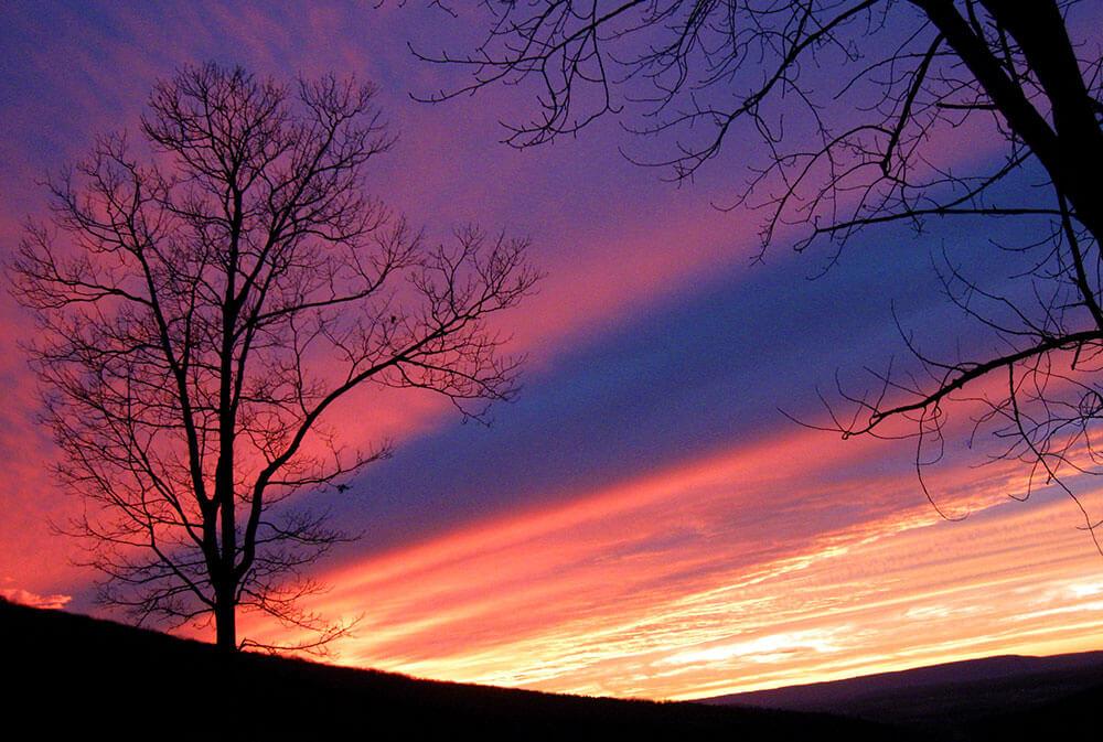 SUNSETW.TREE.NO.2.11.11.09
