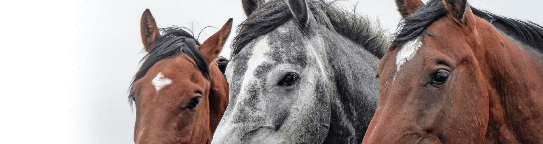 For Horse Lovers of All Ages